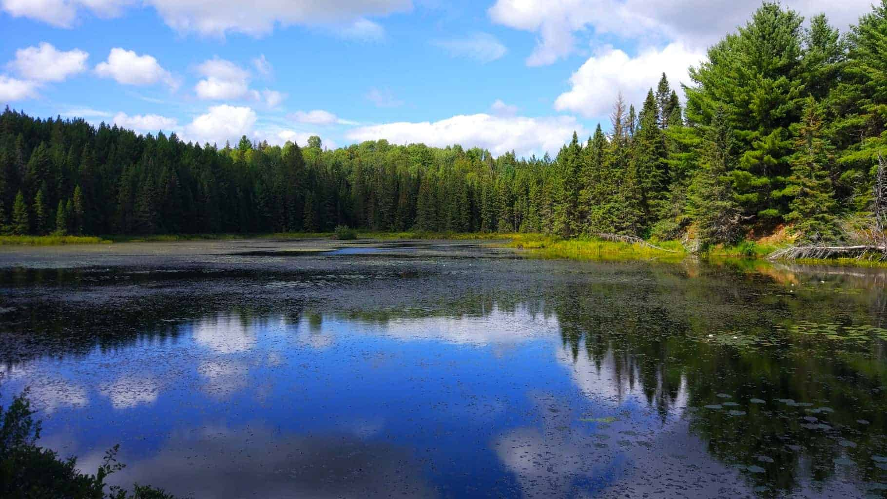 a beautiful lake in algonquin park, canada