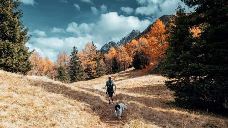 4 Amazing Upsides Of Hiking With A Dog (Plus Easy Tips)