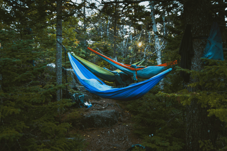 several hammocks hung in a forest
