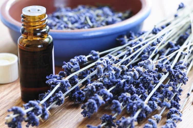 essential oils that are bug repellents