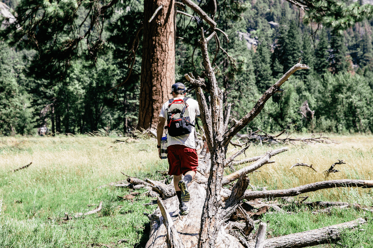 a backpacker in the woods