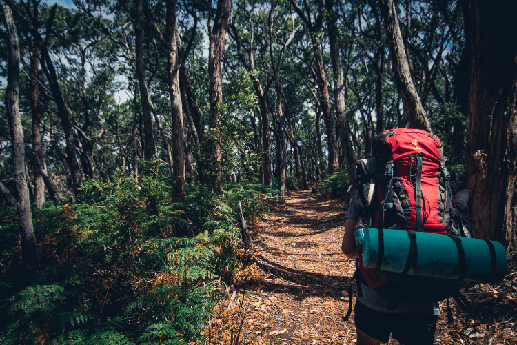 forest hiking with a backpack