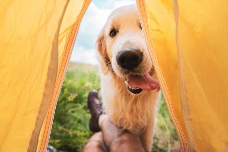 a dog looking into a tent